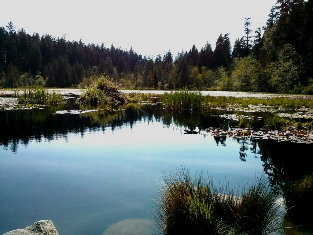 Beaver lake stanley park vancouver off the beaten path ikigai travel