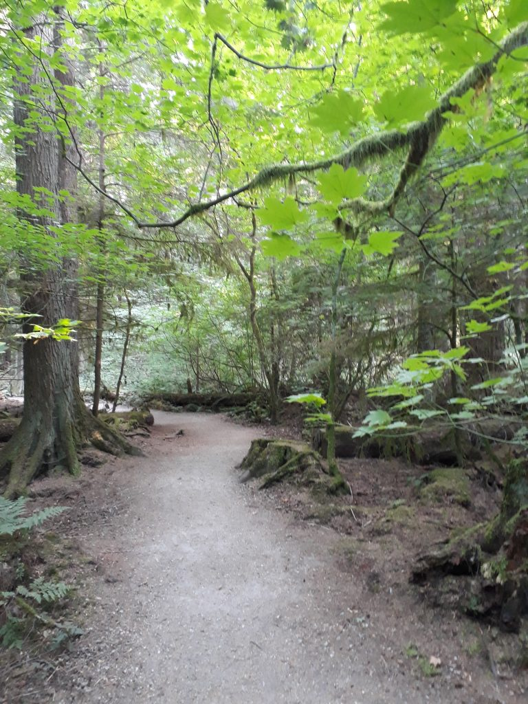 Pacific Spirit Park forest hiking why you should visit Vancouver in summer ikigai travel