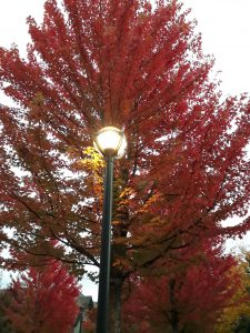 Fall for Vancouver in fall